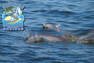 Outer Banks Paradise Dolphin Cruises Aboard the Kokomo