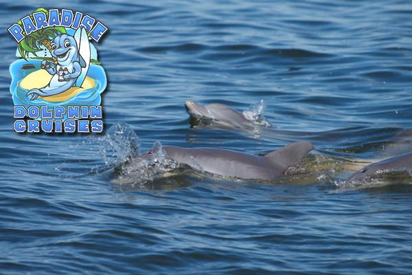 Outer Banks Paradise Dolphin Cruises Aboard the Kokomo