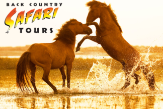Back-Country-Safari-Tours-Outer-Banks.png