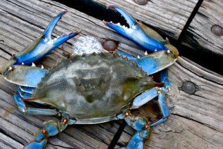 crabbing-outer-banks-nc-600x400-001.jpg