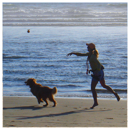 Outer Banks Pet Lease Laws