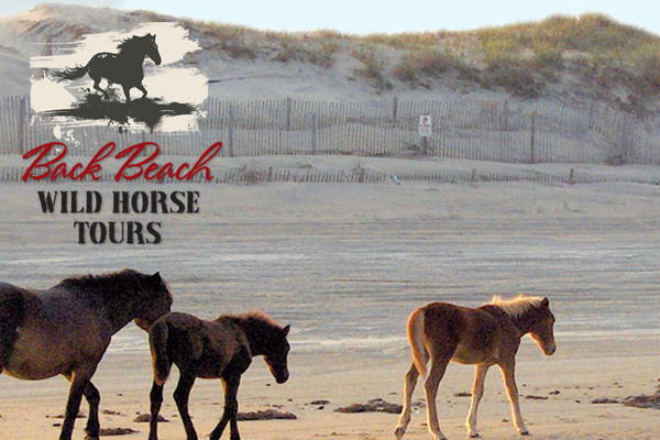 Back Beach Wild Horse Tours Corolla Outer Banks
