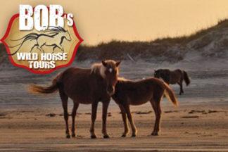 Bob's Corolla Wild Horse Tours Outer Banks
