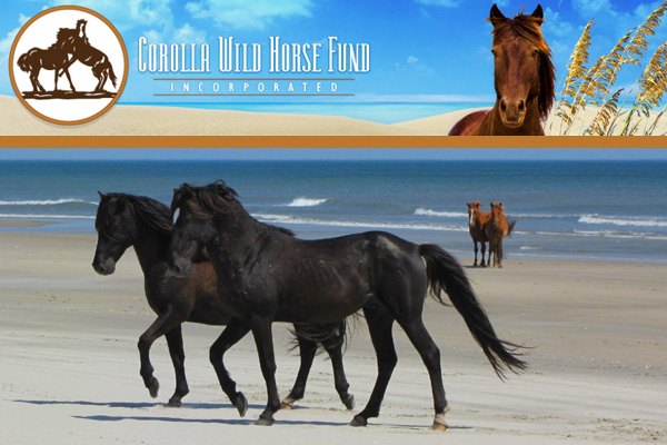 Corolla Wild Horse Fund Outer Banks