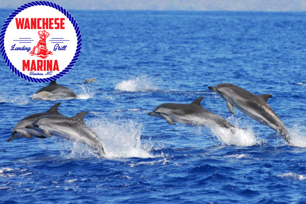 Harbor Star Dolphin Tours - Roanoke Island NC Outer Banks